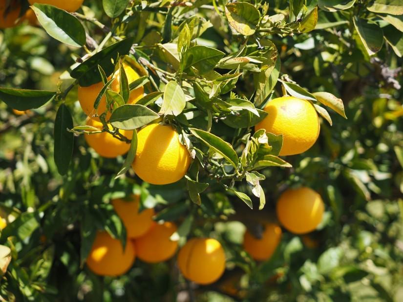 oranges-1117624_1920